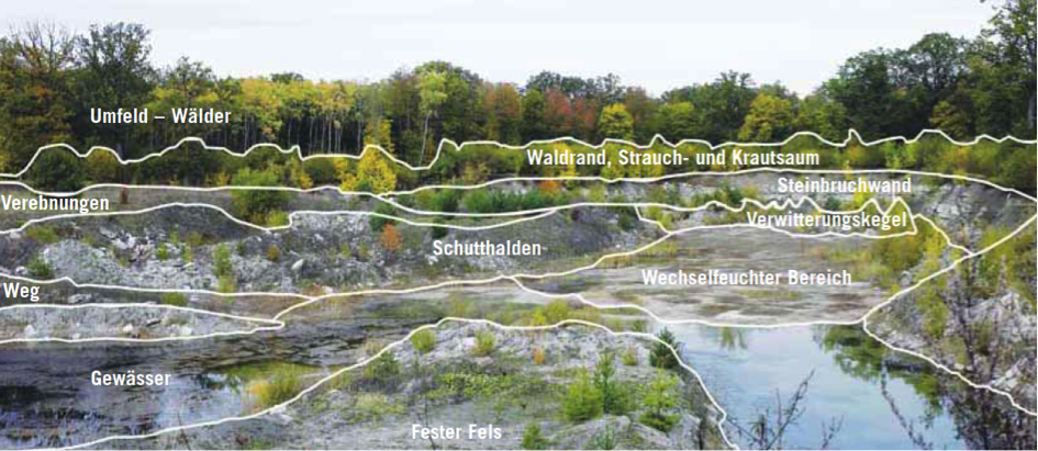 Grafik Lebensraum Gipssteinbruch